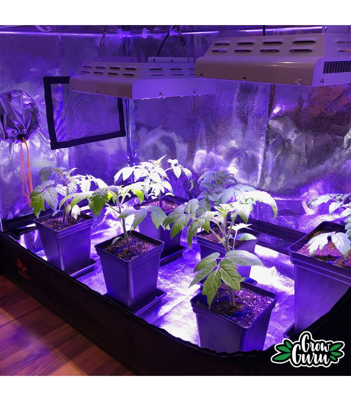 LED grow Secret Jardin weiss blaues Licht TLed 26W 55cm Wuchs