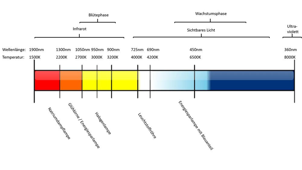 Der für das Wachstum einer Pflanze wichtige Farbbereich bewegt sich im Infraroten und sichtbaren Bereich. Je nach Pflanzenphase wird anderer Lichtbereich favorisiert. Zu den einzelnen Farbtemperaturen sind noch die Lampen eingetragen.