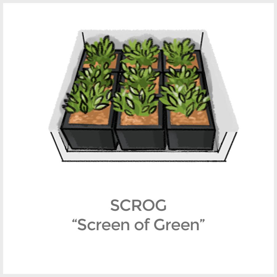 growing set konfigurator growbox komplettset kaufen grow guru. Black Bedroom Furniture Sets. Home Design Ideas